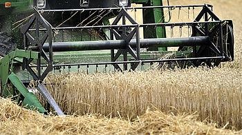 csm_Banner-Rezepte-Tipps-Getreide-Aus-Der-Region_4fc5f9736d.jpg